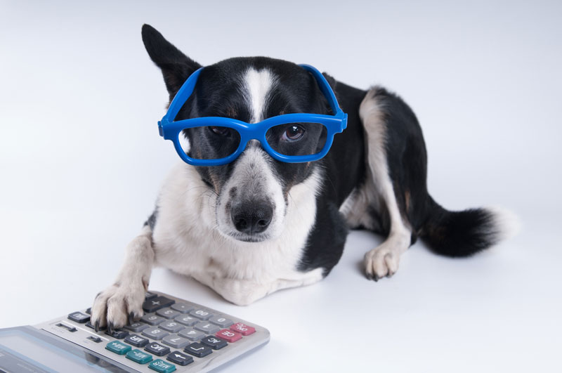 Alan Newcomb's Under-Utilized Pet Tax Deductions